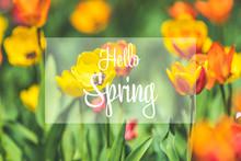 Hello Spring Phrase In The Fra...