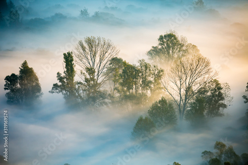 Photo Sunrise on the Adda river with fog and its vegetation