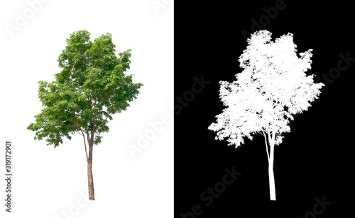 Tree on transparent picture background with clipping path, single tree with clip Canvas Print