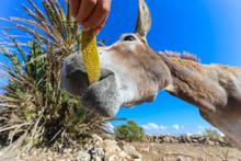 Close-up Of Donkey Feeding