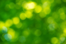 Green Bokeh Background From Na...