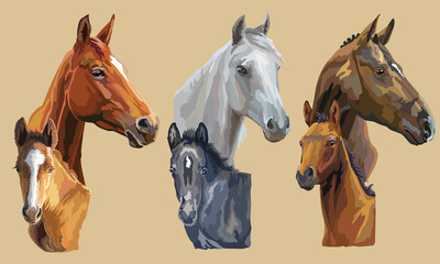 Vector mare and foals