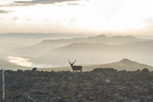 Fotografie, Obraz Deer Standing On Land Against Sky