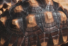 Pattern Of Hard Tortoiseshell,...