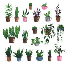 Watercolor Set Of Plants In Po...