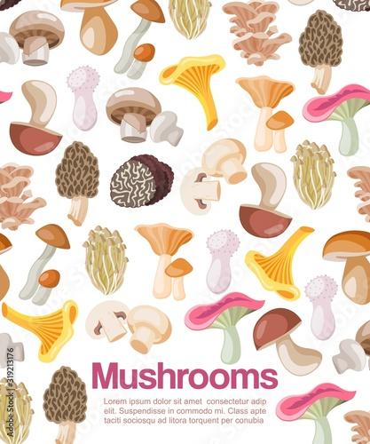 pieczarki-jadalne-organiczne-wegetarianskie-grzybobranie-plakatowa-wektorowa-ilustracja-kreskowka-pieczarki-i-borowiki-lub-kurki-lesne-i-homary-wzorzyste-plakat