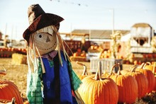 Close-Up Of Scarecrow By Pumpkins