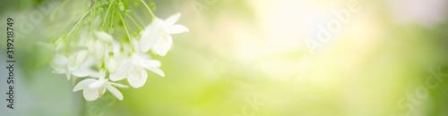 Zbliżenie natury widok piękny kwiat na zamazanym tle w ogródzie z kopii przestrzenią dla teksta używać jako lata tła kwiatu roślin naturalny krajobraz, ekologia, świeży okładkowej strony pojęcie.