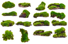Green Moss Isolated On White B...
