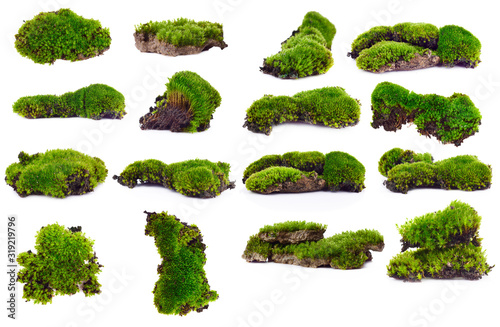 Obraz na plátne Green moss isolated on white bakground
