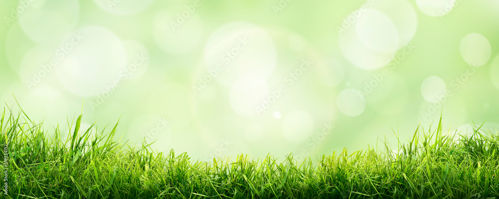 Fototapeta A fresh spring sunny garden background of green grass and blurred foliage bokeh.