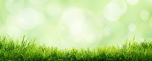 A Fresh Spring Sunny Garden Background Of Green Grass And Blurred Foliage Bokeh.