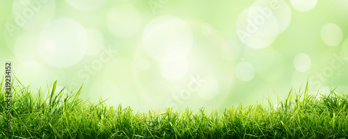 Obraz A fresh spring sunny garden background of green grass and blurred foliage bokeh. - fototapety do salonu