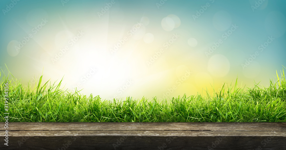 Fototapeta A natural spring garden background of fresh green grass with a bright blue sunny sky with a wooden table to place cut out products on.