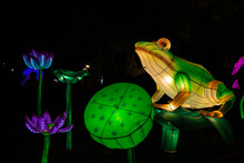 Frogs Chinese Lantern Show Col...