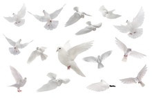 Collage Free Flying White Dove...
