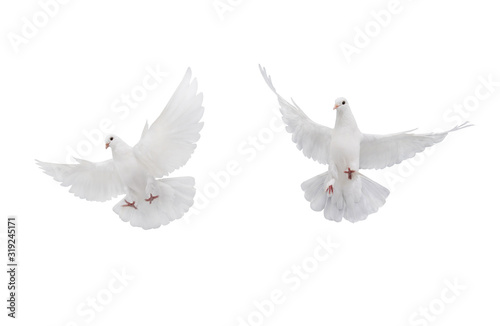 two free flying white dove isolated on a white Wallpaper Mural