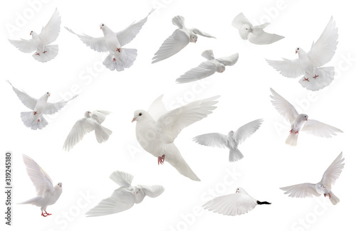 Photo collage free flying white dove isolated on a white