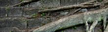 Banner Of Tree Root And Stone With Moss Background.