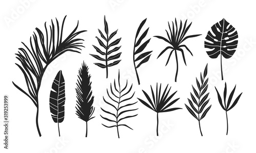 Set of palm leaves silhouettes isolated on white background. Illustration for...