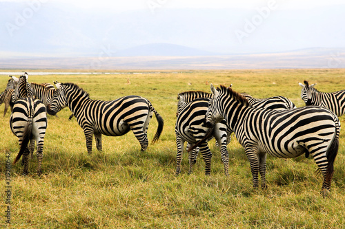 Animals spotted on safari in Tanzania