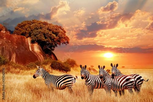 Zebry w afrykańskiej sawannie na tle pięknego zachodu słońca. Park Narodowy Serengeti. Tanzania. Afryka.
