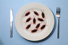 Bugs On A Plate.Insects As Food Or Edible Insects Are Insect Species Used For Human Consumption Either Whole Or As An Ingredient In Processed Food Products Such As Burger Patties, Pasta, Or Snacks.