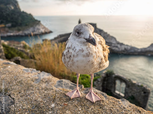 Photo A young seagull in Portovenere in the background the sea