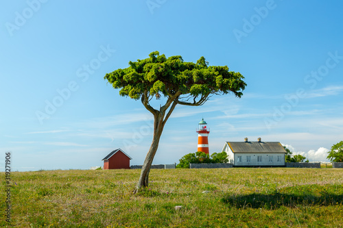 Fotomural Tree and Light House at Narsholmen, Gotland, Sweden.