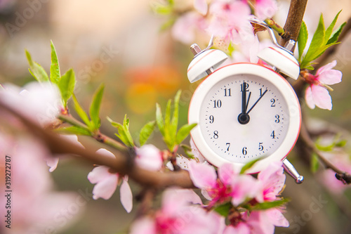 Fototapeta The concept of the beginning of spring. Alarm clock on a flowering branch close-up and copy space. White clock and flowers as a postcard for the holiday. obraz