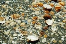 Pebbles, Shellfish And Snails ...