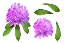 Bright Big Lilac Oleander Flow...