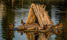 House For Wild Ducks In A City...