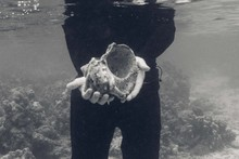 Man Holding Large Sea Shell Un...