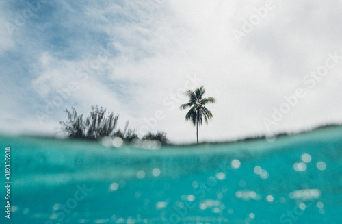 Tropical palm tree beach shot from the ocean - 319335988