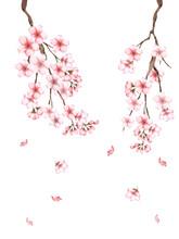 桜の枝水彩画