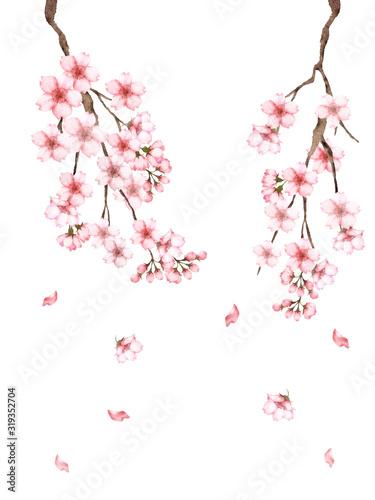 Obraz na plátně 桜の枝水彩画