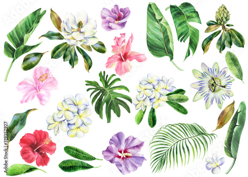 Foto Set of watercolor flowers, branch of plumeria, magnolia, hibiscus, passiflora with green leaves, frangipani, passion flower, banana palm, palm tree, hand drawn jungle illustration