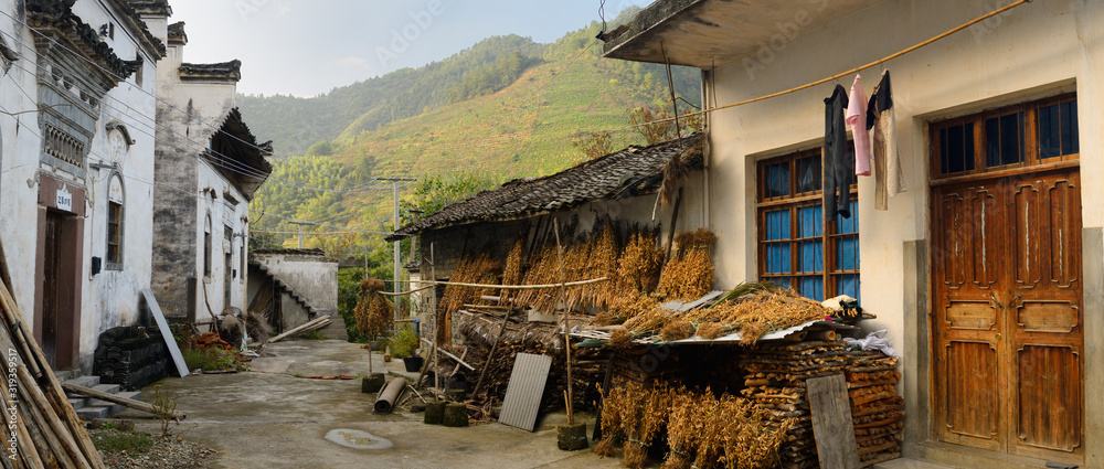 Fototapeta Drying soybeans in old village of Shangshe on Fengle lake Huangshan China with tea plants on hillside