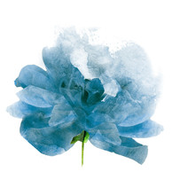 Watercolor Flower , Isolated On White Background