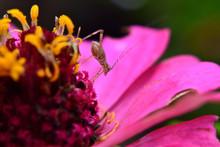 Small Insects Like Crickets Li...
