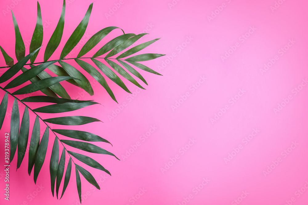 Fototapeta Beautiful lush tropical leaves on pink background. Space for text