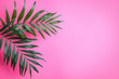 canvas print picture - Beautiful lush tropical leaves on pink background. Space for text