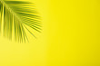 Leinwanddruck Bild - Beautiful lush tropical leaf on yellow background. Space for text