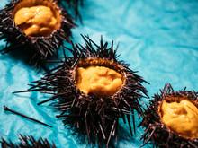 Sea Urchin Japanese Fresh Seafood In Market