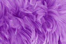 Beautiful Purple Bird Feathers...
