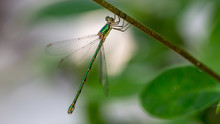 A Dragonfly Resting On A Branc...