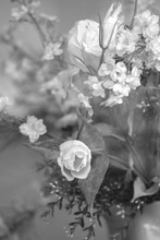 Black And White Image Of Roses...