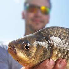 Young Happy Angler Holds The Fish (Carassius) And Smiles With Clear Blue Sky As The Background