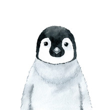 Penguin - Watercolor Illustrat...